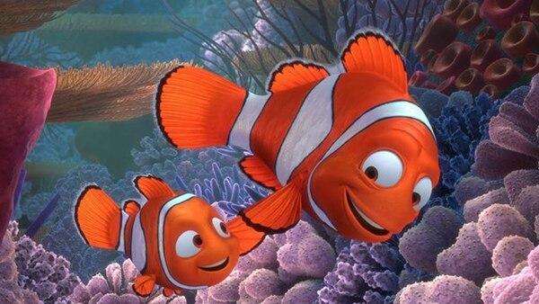 Resultado de imagen para pez payaso en peligro de extincion