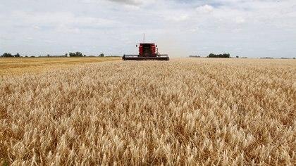 La Bolsa de Comercio de Rosario proyecta para la región núcleo la mayor cosecha de soja y maíz de los últimos 10 años REUTERS/Enrique Marcarian