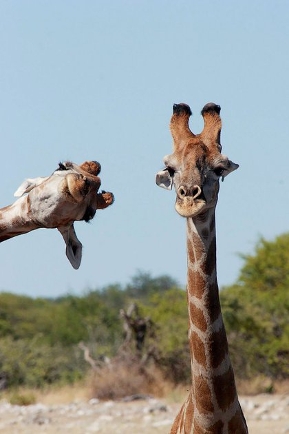 'Crashing into the picture' - Brigitte Alcalay Marcon /Comedy Wildlife Photo Awards 2020