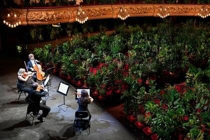 El cuarteto Uceli durante el concierto en el Teatro del Liceu (Photo by LLUIS GENE / AFP)