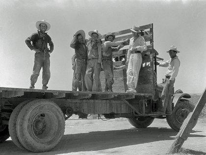 Trabajadores mexicanos que van hacia las plantaciones de sandías (Imperial Valley, Californian 1935, junio)