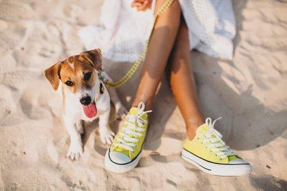 Playa con perros, consejos de los veterinarios para pasar unas vacaciones sin preocupaciones (Shutterstock)
