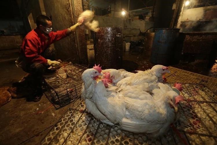 Un vendedor de gallinas en un mercado de animales en Wuhan, en la provincia china de Hubei. REUTERS/Stringer