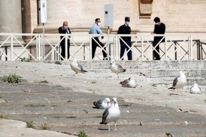 Las gaviotas se sientan en las escaleras de la Basílica de San Pedro mientras el Papa Francisco celebra la audiencia general semanal en el Vaticano el 27 de mayo de 2020. (REUTERS/Remo Casilli)