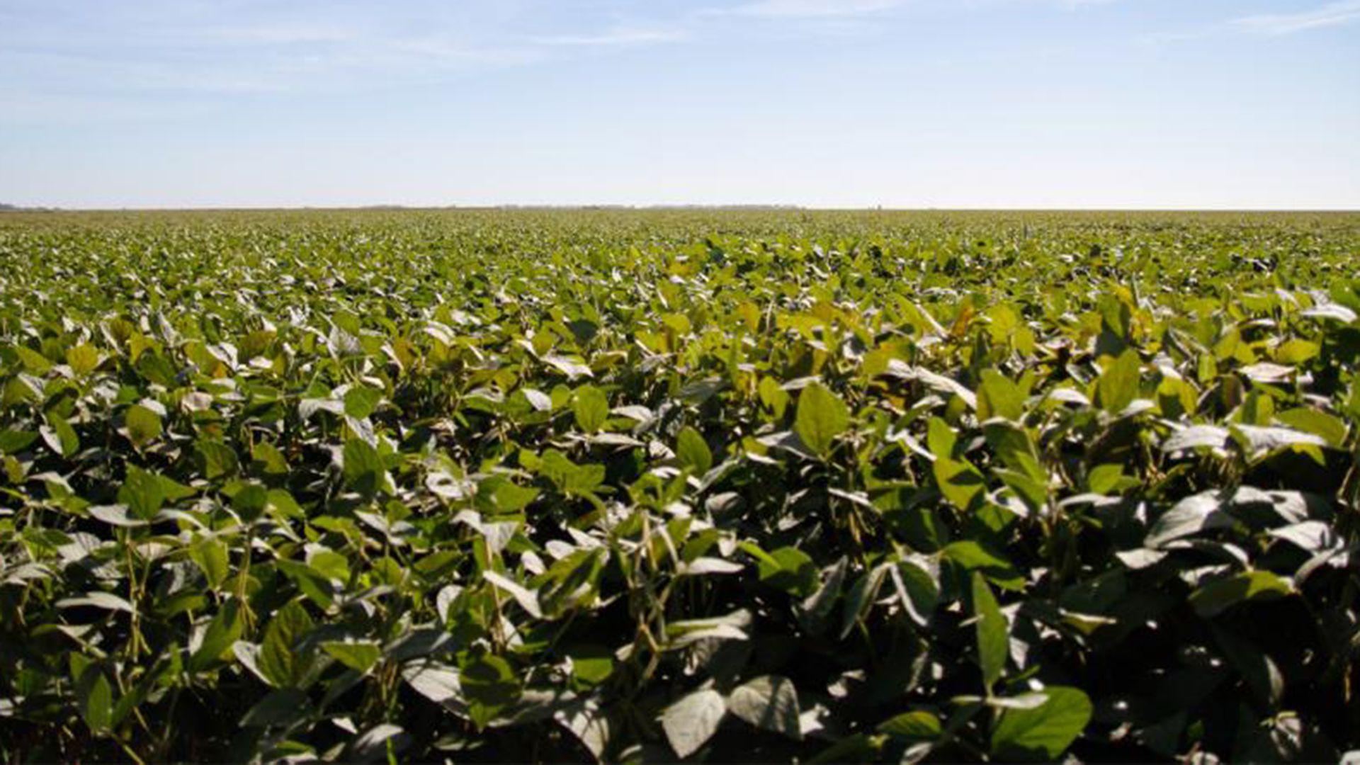 Analistas del mercado de granos realizaron recomendaciones para aprovechar este contexto de mejora de los precios