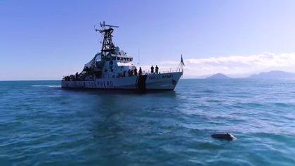 A partir de hoy quedan 60 días para que los pescadores entreguen sus redes tradicionales (Foto: Sea Sheperd)