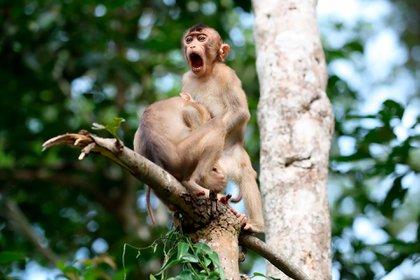 'Monkey Business' - Megan Lorenz / Comedy Wildlife Photo Awards 2020