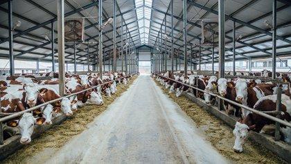 La agricultura, la producción de alimentos y la deforestación contribuyen al cambio climático (Shutterstock)