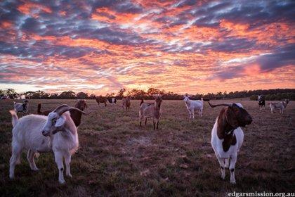 Desde 2003 Edgar's Mission Farm Sanctuary ha rescatado a cientos de animales de varias especies y les ha encontrado un lugar seguro para vivir Foto: (Edgar's Mission Farm Sanctuary)