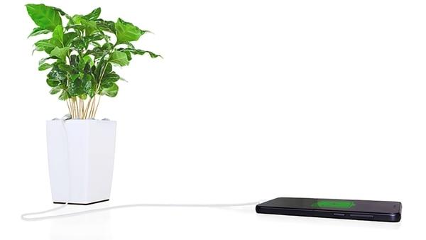 La planta proporciona la energía suficiente para abastecer un puerto USB, con el que se puede cargar un celular o tablet