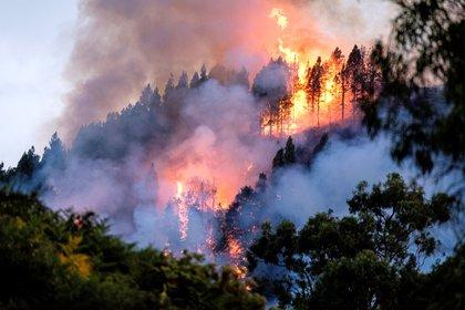 """""""Los incendios e inundaciones apocalípticas, los ciclones y huracanes son cada vez más la nueva normalidad"""", lamentó Antonio Guterres (EFE/Angel Medina)"""