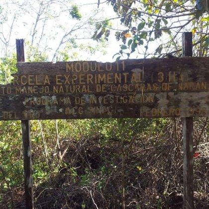 Un cartel que devela el programa de investigación con cáscaras de naranja que la Justicia de Costa Rica invalidó