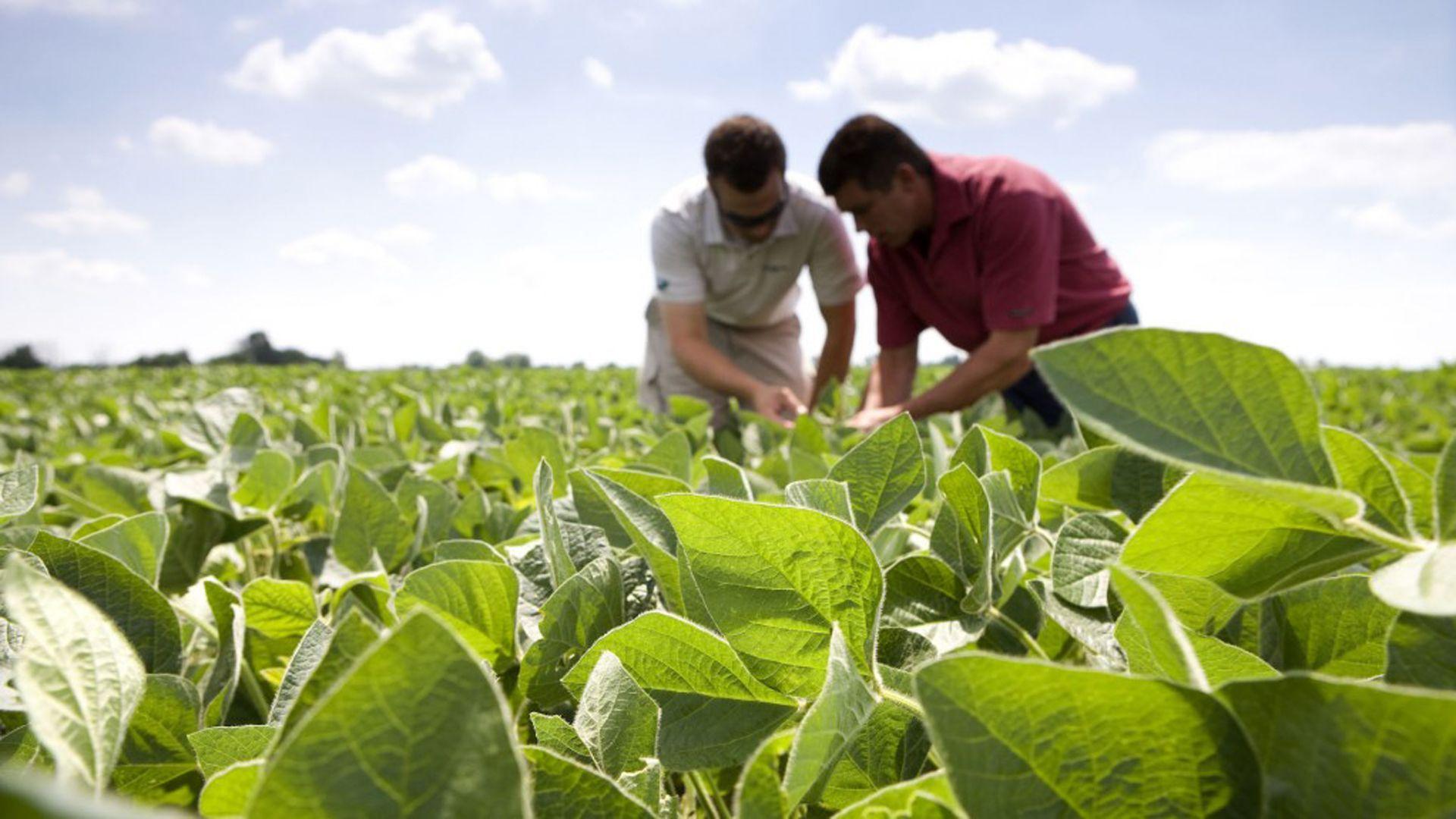 """Según la Bolsa de Cereales de Buenos Aires, hasta el momento la siembra de soja se ubica en el 77% de las 17,2 millones de hectáreas proyectadas para el cultivo. El desafío de hacer frente el fenómeno climático de """"La Nina""""."""