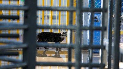 En Israel, un gato pasea en medio de la cuarentena por coronavirus