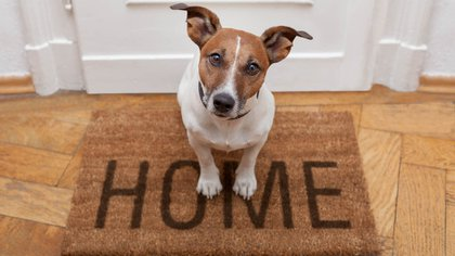 El perro es un animal social y estar solo le genera ansiedad