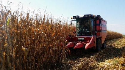 Tras el conflicto por el freno a las exportaciones de maíz, el Gobierno busca acuerdos para evitar una escalada mayor de precios en los alimentos.
