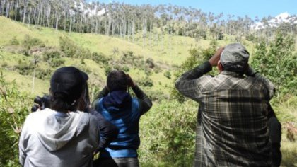 Avistamiento de aves en Tolima. Foto: Cortolima.