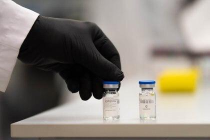 Los anticuerpos policlonales equinos se utilizan para la elaboración de medicamentos, atender emergencias médicas, entre otras  (Foto: Franco Fafasuli)