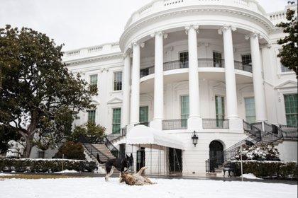 Dogs run free around the White House Photo: (Adam Schultz Official White House)