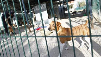 """Más de 150 mil animales son abandonados cada año en España, muchos de ellos acaban sacrificados de forma """"sistemática"""" en perreras municipales"""