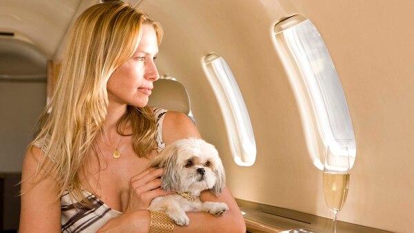 Se recomienda que la mascota no esté en contacto con animales salvajes antes del viaje (Getty)