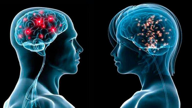 La interacción con otras personas favorece un cerebro sano