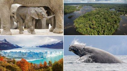 """Este año la Asamblea General de las Naciones Unidas inició la """"Década de la Restauración de Ecosistemas"""", indicando que para cumplir los objetivos de Desarrollo Sostenible para el 2030 y evitar el cambio climático"""