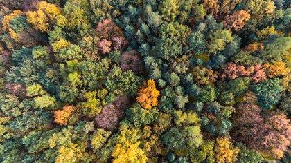 Los bosques regulan el clima, reducen la velocidad del viento y la contaminación sonora (Shutterstock)