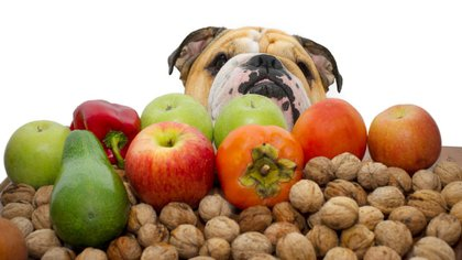 Para no padecer tanto los calores agobiantes las frutas y las verduras son muy recomendables para los perros (iStock)