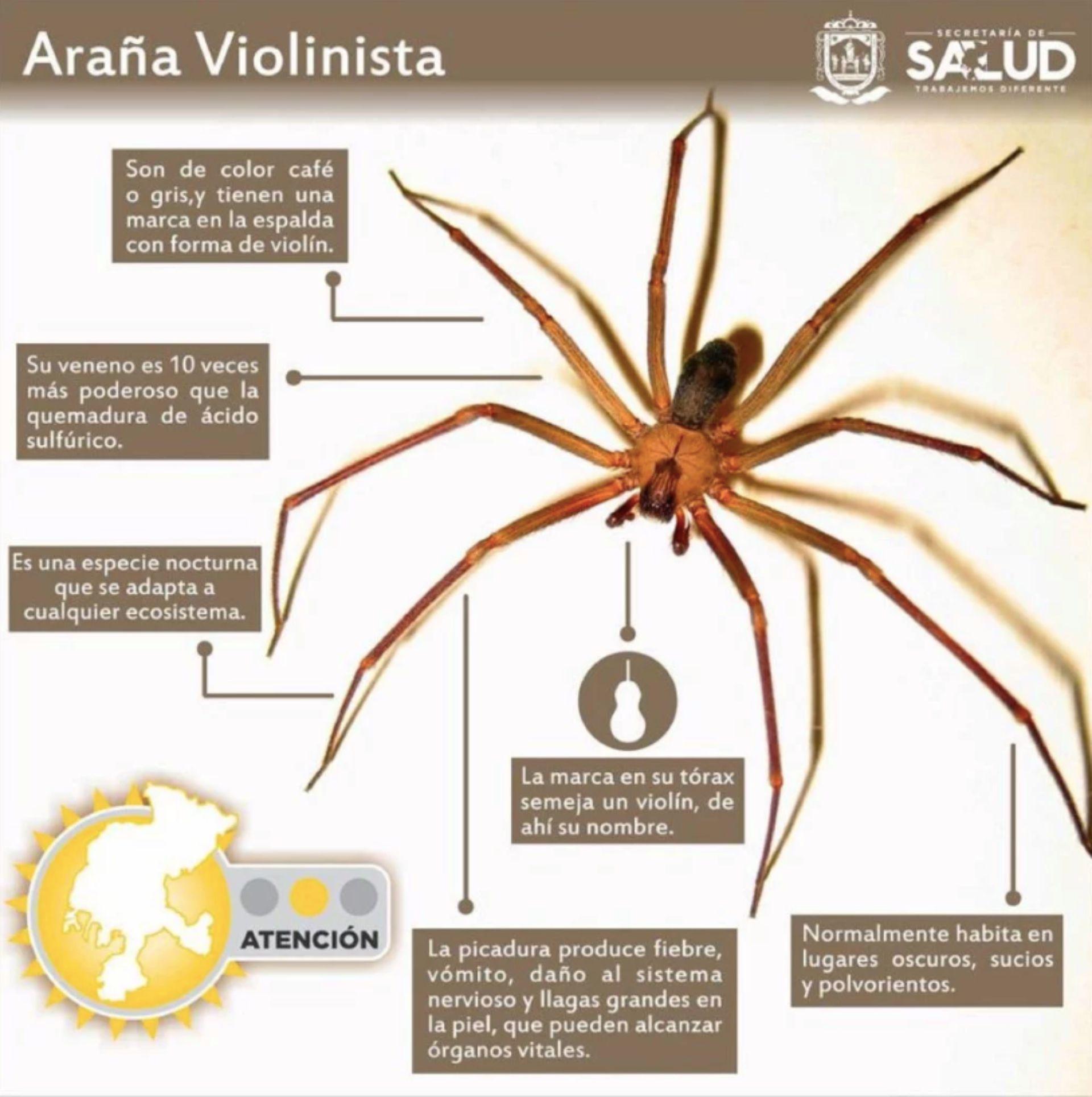Información básica de este género de araña (Foto: Secretaría de Salud)