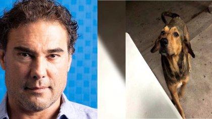 Eduardo Yáñez se sumó a la exigencia de justicia para Rodolfo, el perro asesinado en Sinaloa