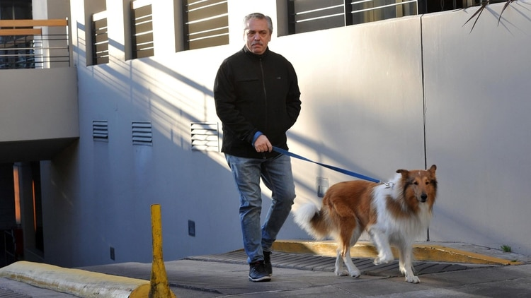 Alberto Fernández, la mañana de las PASO, junto a su perro Dylan