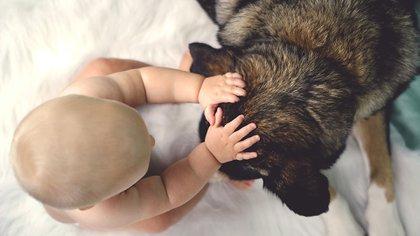 El can en primera instancia querrá tocar y sentir al nuevo integrante, es importante no dramatizar la situación y siempre estar presentes en los encuentros (Getty Images)