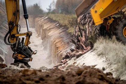 Cientos de visones son enterrados en una fosa en un área militar cerca de Holstebro, en Dinamarca. EFE/Morten Stricker/Dagbladet Holstebro Struer/Jysk Fynske/Archivo