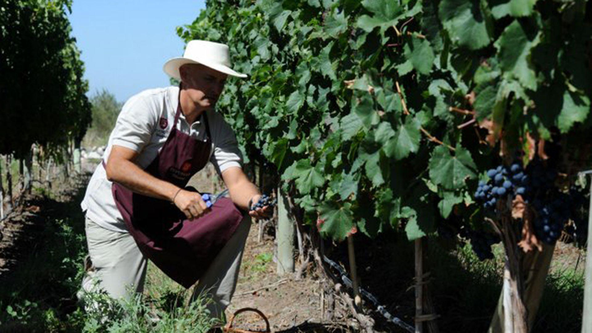Una nueva encuesta en el sector agropecuario reflejó el malestar del sector con la dirigencia política, pero también hay autocrítica entre productores y tomadores de decisiones