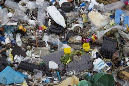 Se han encontrado microplásticos en más de 114 especies acuáticas en 2018, según la Organización Marítima Internacional, y se han encontrado en sal, lechuga, manzanas y más.  Dan Kitwood/Getty Images Europe