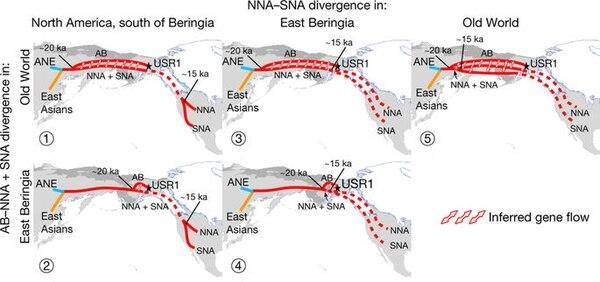 Los patrones migratorios a América según un análisis genético