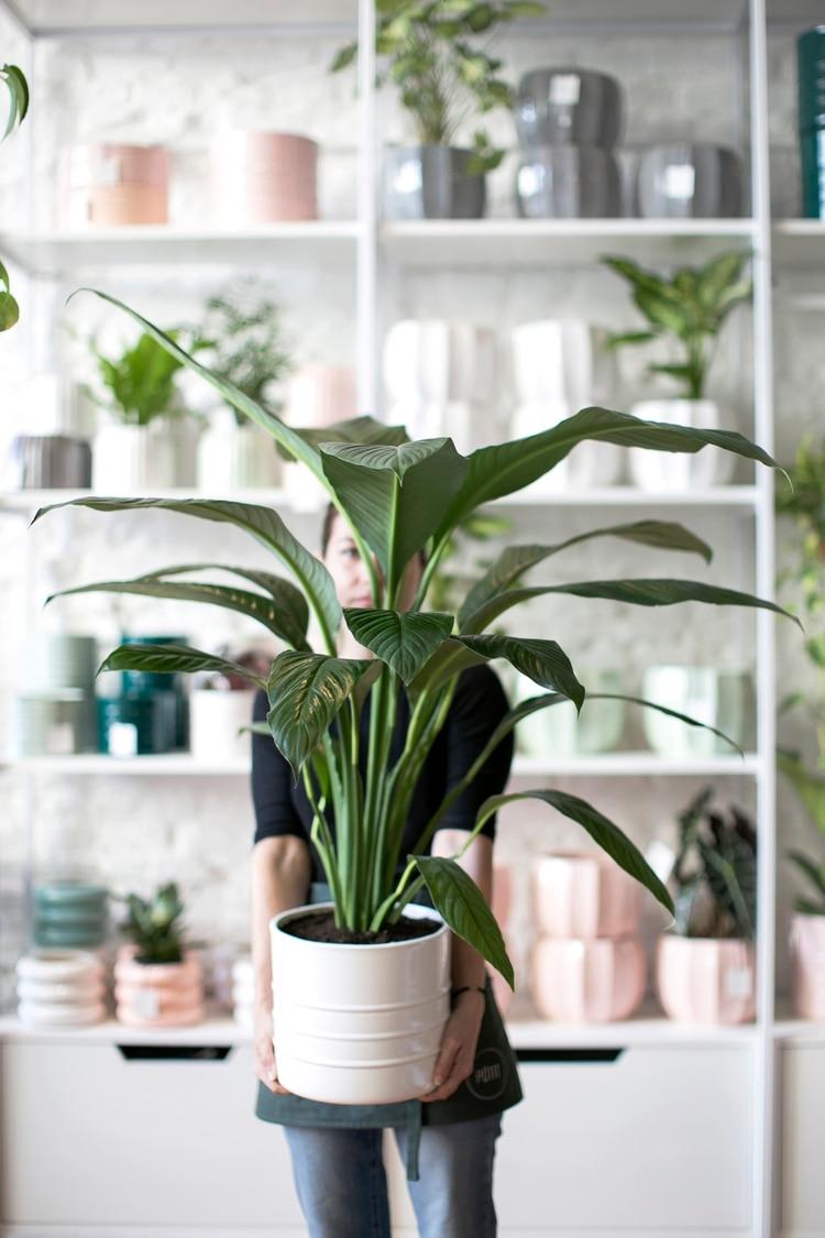 mejores plantas decorativas de interior Plantas De Interior 8 Ideas Para Decorar El Hogar Infobae