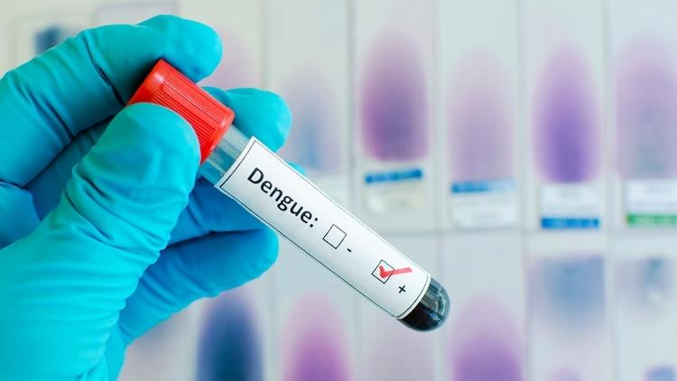 En los últimos ocho meses se registraron 10 personas fallecidas que dieron positivo en la prueba para dengue - Shutterstock