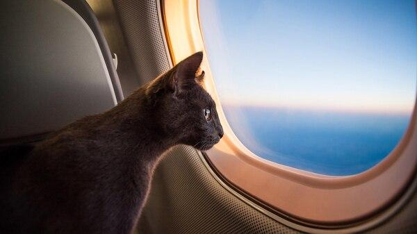 Cada animal es diferente y por eso hay que averiguar antes del viaje si está apto para hacerlo (Getty)