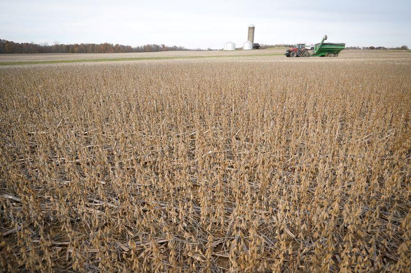 Foto de archivo de un campo de soja siendo cosechado en Roachdale, Indiana Nov 8, 2019. REUTERS/Bryan Woolston