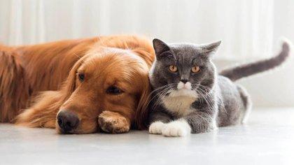"""""""La humanidad valora como nunca antes la compañía, y la encontró en los perros, los mejores amigos del hombre"""", coincidieron las expertas consultadas por Infobae"""