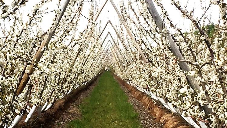 Quiroga pretende diversificar la matriz económicade la provincia y apuesta por la industria frutihortícola