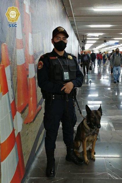 Los binomios caninos son entrenados para ayudar a labores de detección y auxilio (Foto: SSC)