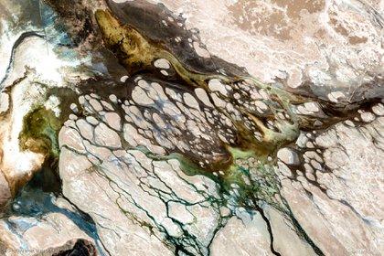 En su fauna se destacan entre otras especies: el cóndor, puma, vicuña, llama, alpaca, chinchilla, zorro andino, gato andino, flamenco -de la especie llamada parina-, en algunas de sus lagunas se encuentran algunos de los pocos estromatolitos hoy supervivivientes en el planeta Tierra