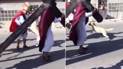 Un perro conmovió las redes sociales por defender a Jesús (Foto: YouTube)