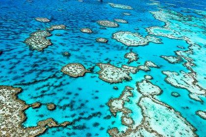 Descubren coral más alto que el Empire State en Australia