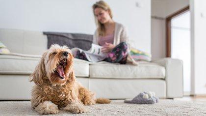 Los perros aprenden mucho más rápido al ser premiados (Shutterstock)