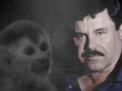 De acuerdo con la investigación oficial, la mascota jugó una pieza clave para encontrar el paradero del capo después de su fuga del Altiplano (Foto: Steve Allen/Infobae México)