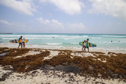 Gaviota Azul, Cancún, Quintana Roo. 18 de abril de 2021.